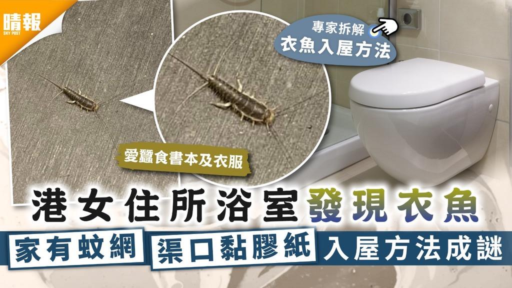 衣魚出沒 港女住所浴室發現衣魚 家有蚊網渠口黏膠紙入屋方法成謎