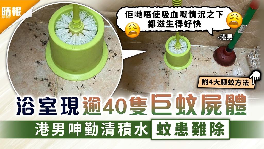 蚊患嚴重|浴室現逾40隻巨蚊屍體 港男呻勤清積水蚊患難除