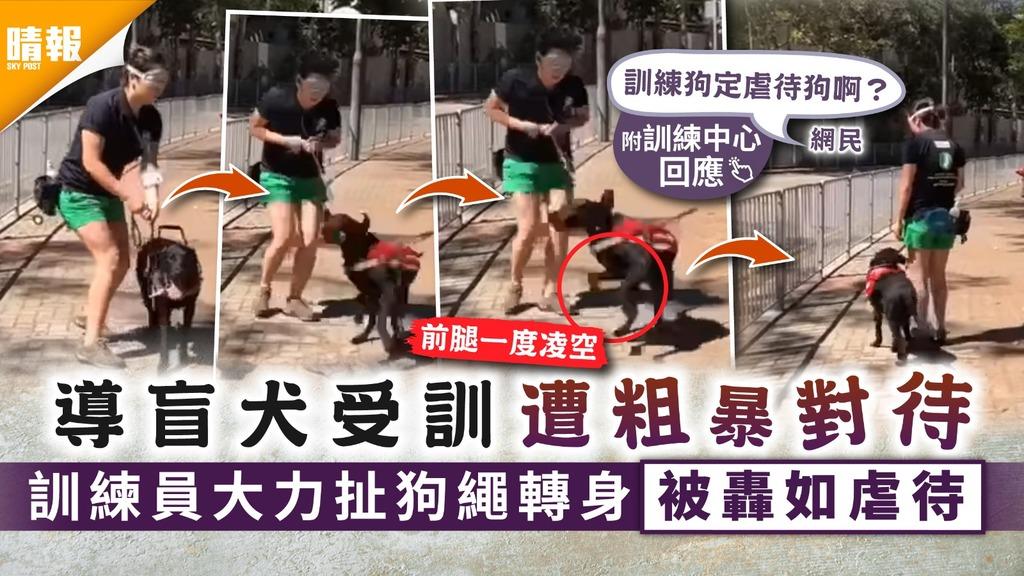虐狗爭議|導盲犬受訓遭粗暴對待 訓練員大力扯狗繩轉身被轟如虐待