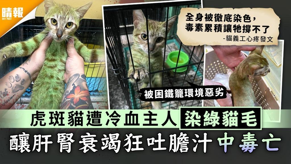 虐待動物 虎斑貓遭冷血主人染綠貓毛 釀肝腎衰竭狂吐膽汁中毒亡