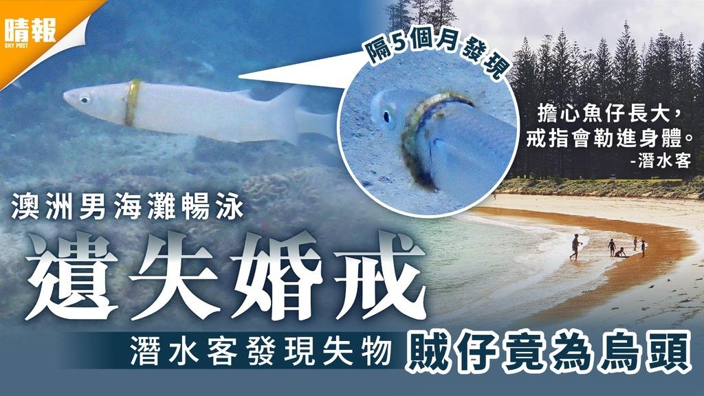 大海尋魚|澳洲男海灘暢泳丟失婚戒 潛水客發現失物賊仔竟為烏頭