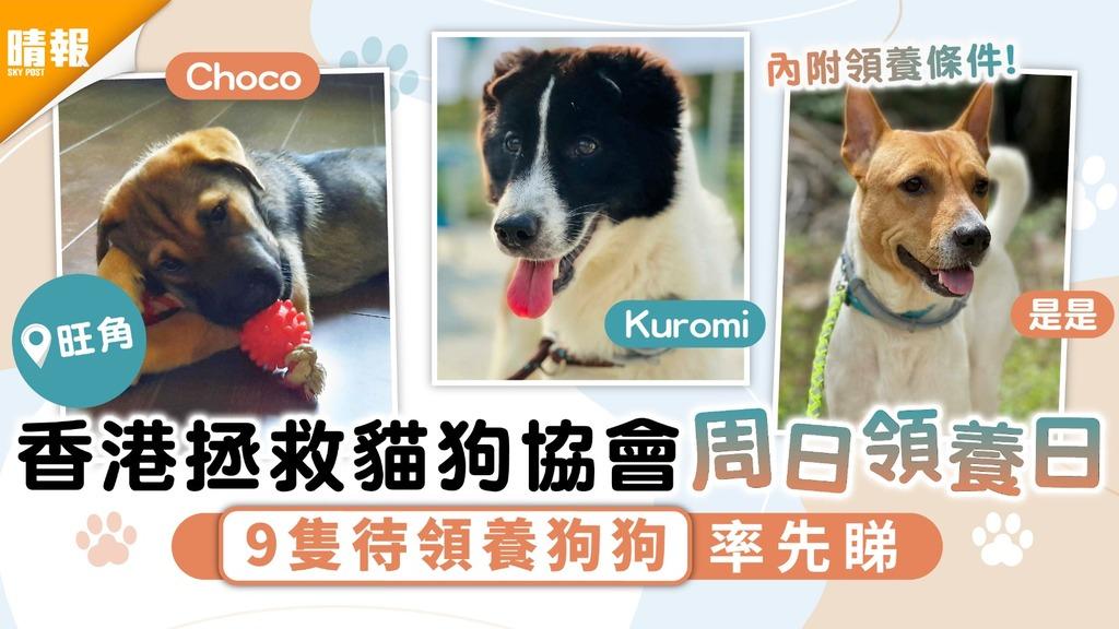 周日好去處│香港拯救貓狗協會周日領養日 9隻待領養狗狗率先睇