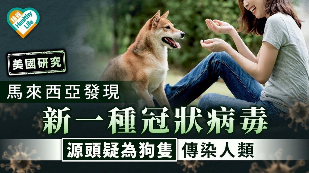 美國研究 馬來西亞發現新品種冠狀病毒 源頭疑為狗隻傳染人類