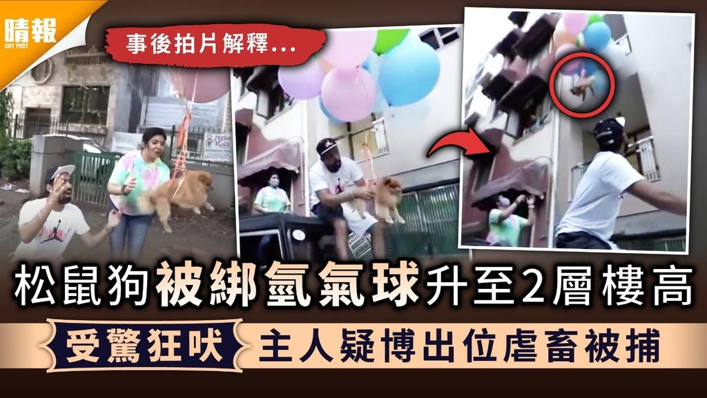 虐待動物|松鼠狗被綁氫氣球升至2層樓高 受驚狂吠主人疑博出位虐畜被捕
