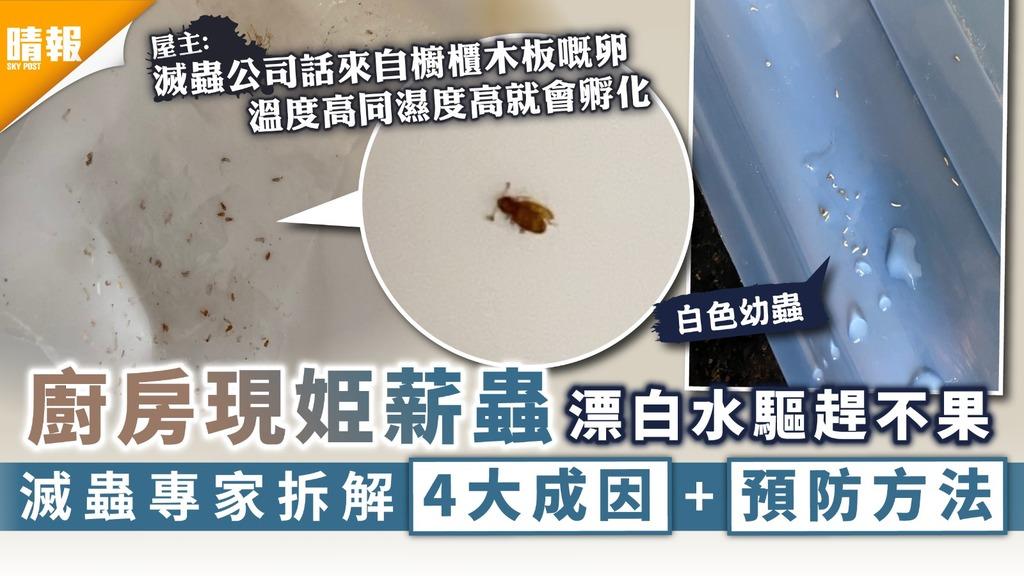 潮濕天氣|廚房現姫薪蟲漂白水驅趕不果 滅蟲專家拆解4大成因+預防方法