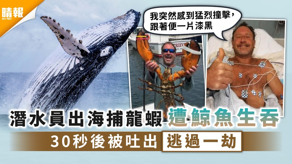 死裡逃生|潛水員出海捕龍蝦遭鯨魚生吞 30秒後被吐出逃過一劫