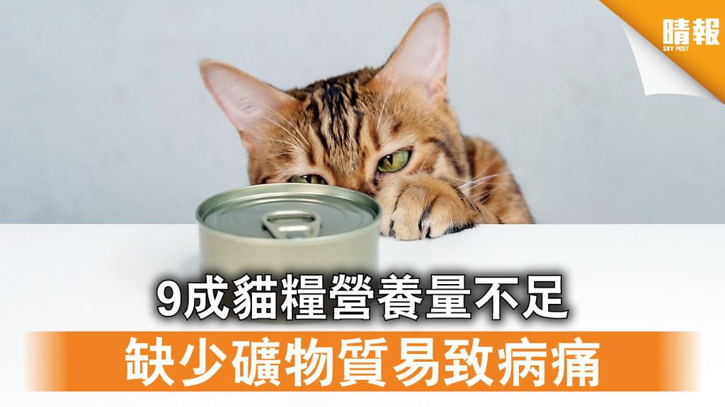 消委會|9成貓糧營養量不足 缺少礦物質易致病痛(附貓主食濕糧推介及餵飼貼士)