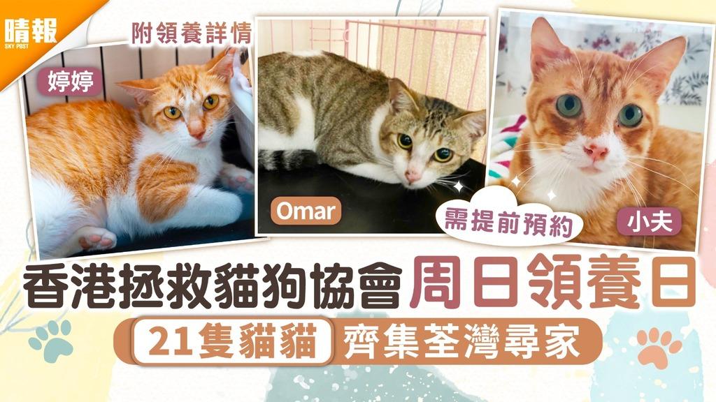 周日好去處|香港拯救貓狗協會周日領養日 21隻貓貓齊集荃灣尋家