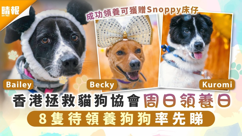 周日好去處│香港拯救貓狗協會周日領養日 8隻待領養狗狗率先睇