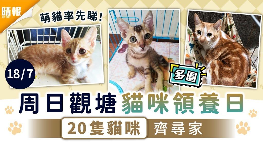 周日好去處|周日觀塘貓咪領養日 20隻貓咪齊尋家