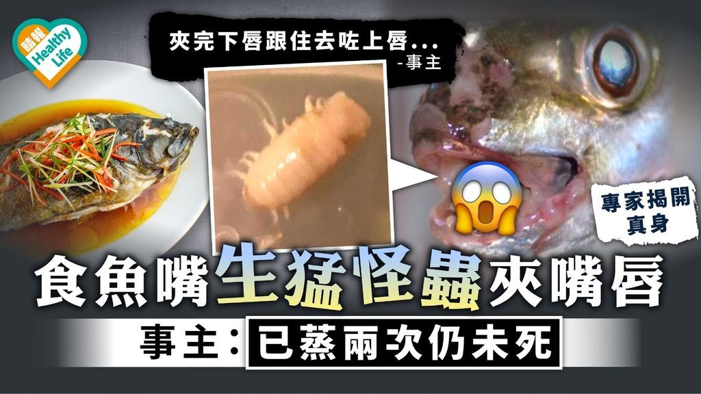 食用安全 食魚嘴被生猛怪蟲夾嘴唇 事主:已蒸兩次仍未死 附拆解魚蝨真身