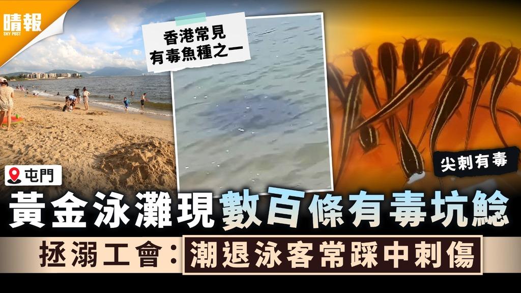 泳客注意|黃金泳灘現數百條有毒坑鯰 拯溺工會:潮退泳客常踩中刺傷