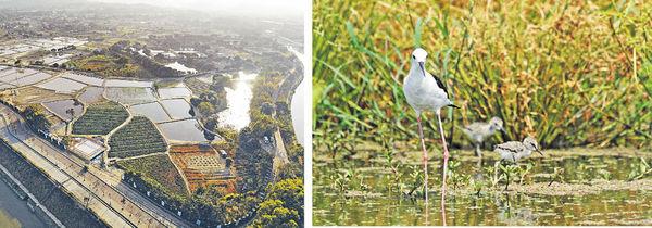 塱原濕地優化 12種鳥類入內繁殖 料2023年竣工 總面積增8公頃