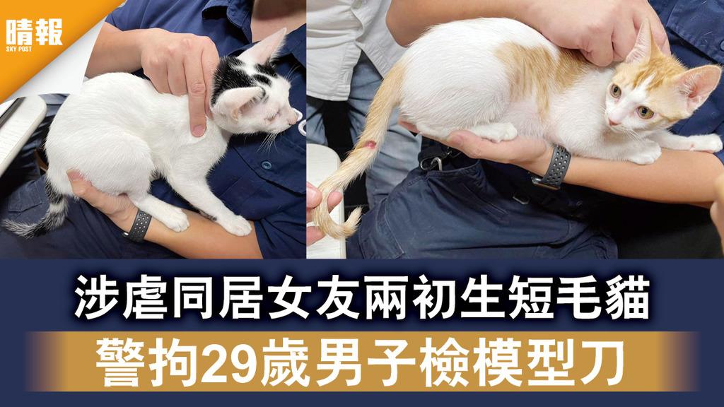 虐待動物 涉虐同居女友兩初生短毛貓 警拘29歲男子檢模型刀