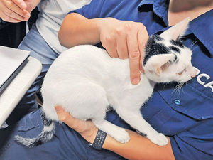 涉虐兩幼貓 貓主男友被捕