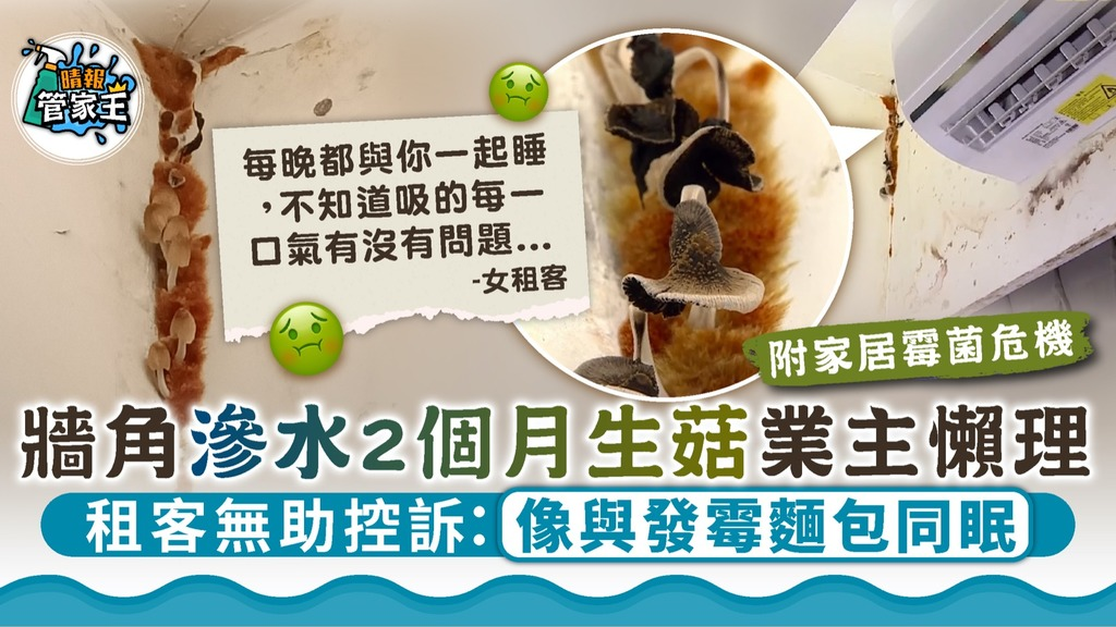 家居霉菌|牆角滲水2個月生菇業主懶理 租客無助控訴:像與發霉麵包同眠【附家居霉菌危機】