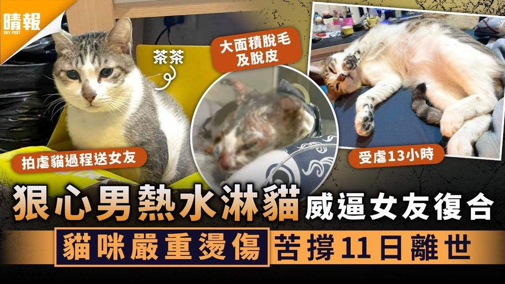 虐待動物|狠心男熱水淋貓威逼女友復合 貓咪嚴重燙傷苦撐11日離世