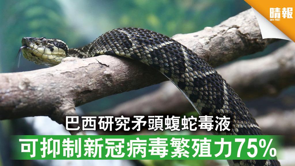 新冠肺炎|巴西研究矛頭蝮蛇毒液 可抑制新冠病毒繁殖力75%