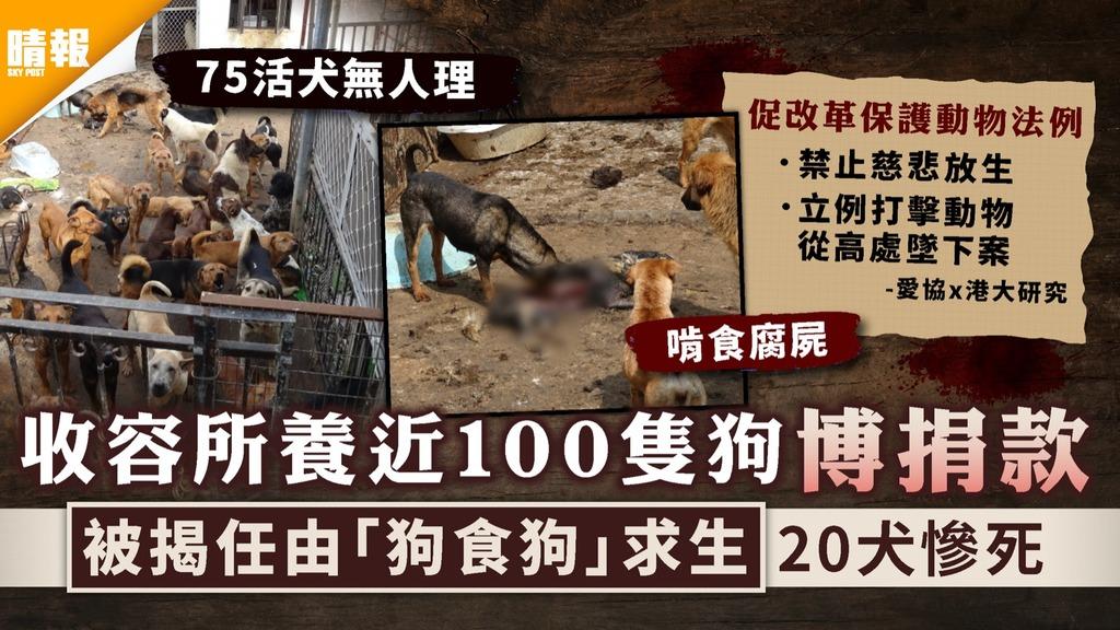 改革保護動物法|收容所養近100隻狗博捐款 被揭任由「狗食狗」求生20犬慘死