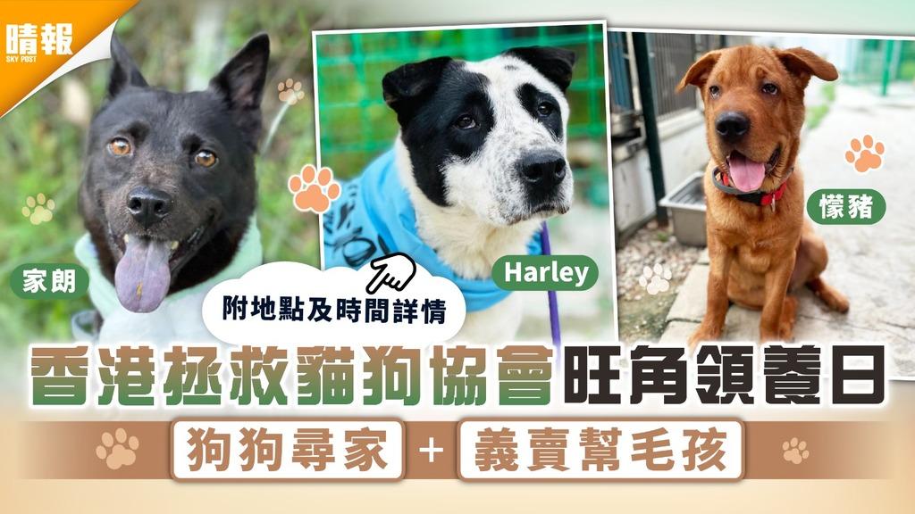 周日好去處|香港拯救貓狗協會旺角領養日 狗狗尋家+義賣幫毛孩