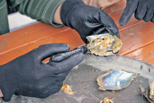 魚排初試開蚌採珠 DIY珍珠首飾