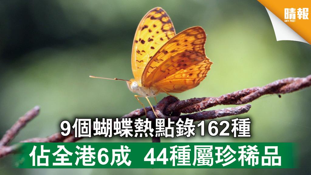 自然生態 9個蝴蝶熱點錄162種 佔全港6成 44種屬珍稀品(多圖)