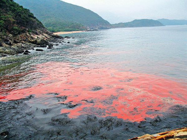 人類活動改變營養成分 珠江口矽藻20年倍增