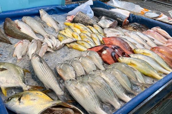 79人感染侵入性乙型鏈球菌其中7人亡 嚴重可致敗血病/腦膜炎 專家7招安全揀魚避免中招